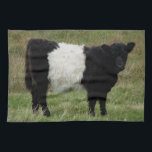 "Dartmoor Belted Galloway Calf Kitchen Towel<br><div class=""desc"">It is my pleasure and interest to see where the Belted Galllowy Cattle are roaming and grazing on the wild landscape of Dartmoor.</div>"