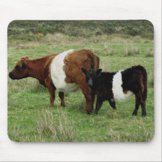 Dartmoor Belted Galloway Cow And Calf Mouse Pad