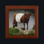"Dartmoor Belted Galloway Cow Standing River Jewelry Box<br><div class=""desc"">It was my pleasure and with interest to see the Belted Cow standing in a river looking at me with interest on the wild landscape of Dartmoor.</div>"
