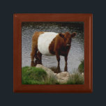 """Dartmoor Belted Galloway Cow Standing River Jewelry Box<br><div class=""""desc"""">It was my pleasure and with interest to see the Belted Cow standing in a river looking at me with interest on the wild landscape of Dartmoor.</div>"""