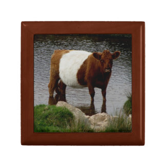 Dartmoor Belted Galloway Cow Standing River Jewelry Box