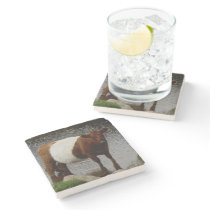 Dartmoor Belted Galloway Cow Standing River Stone Coaster