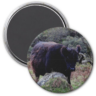 Dartmoor Black Galloway Cow Scratching On Tree 3 Inch Round Magnet