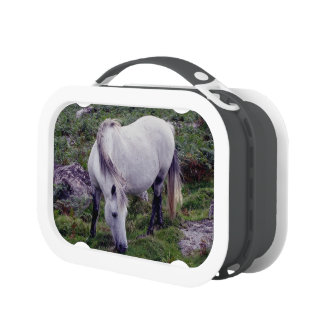 Dartmoor Grey Pony Grazing In Rocks Lunchboxes