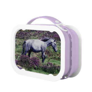 Dartmoor Grey Pony Roaming In The heather Lunch Box