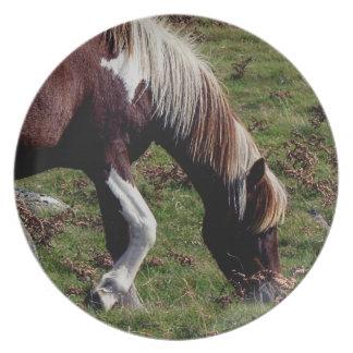 Dartmoor Hill Pony Grazeing Dinner Plate