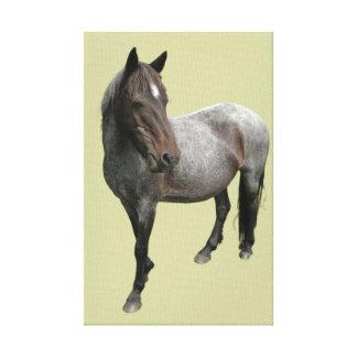 Dartmoor Horse Wrapped Canvas Canvas Print