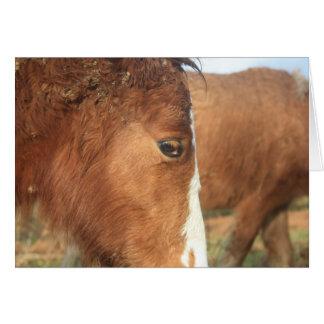 Dartmoor Ponies Greeting Cards