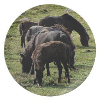 Dartmoor Ponies Grazeing Summer 2. Melamine Plate