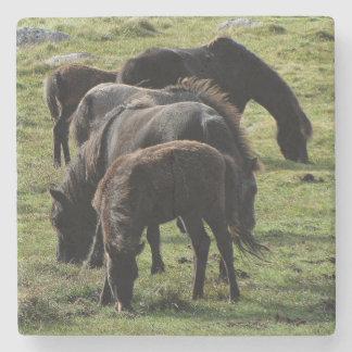 Dartmoor Ponies Grazing Summer Stone Beverage Coaster