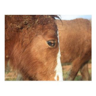Dartmoor Ponies Post Cards