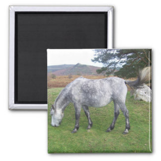 Dartmoor pony 2 inch square magnet