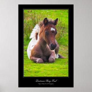 Dartmoor Pony Foal gallery-style poster print