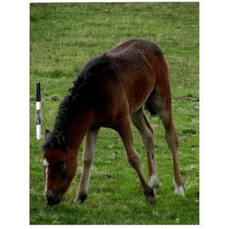 Dartmoor Pony Foal Grazeing Dry-Erase Boards