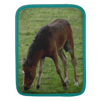 Dartmoor Pony Foal Grazing Sleeves For iPads