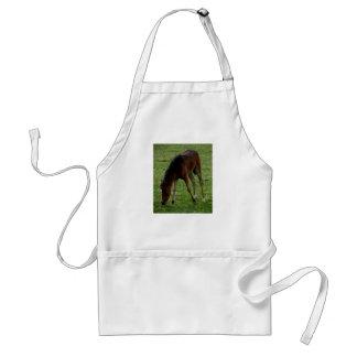 Dartmoor Pony Foal Grazing On The Moor Standard Apron