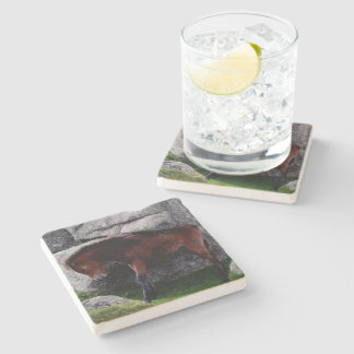 Dartmoor Pony Foal Itching Bone Hill Rocks Stone Beverage Coaster