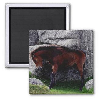 Dartmoor Pony Foal Itching Bone Hill Rocks Refrigerator Magnet