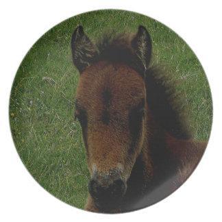 Dartmoor Pony Foal Resting Plates