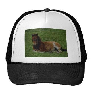 Dartmoor Pony Foal Summer Afternoon Resting Hat