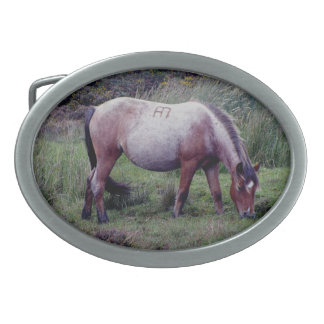 Dartmoor Pony Grazeing Autunm Oval Belt Buckle