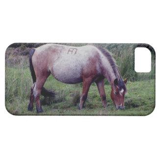 Dartmoor Pony Grazeing Early Autunm iPhone SE/5/5s Case