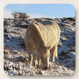 Dartmoor Pony Grazeing In Snow Beverage Coaster