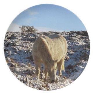 Dartmoor Pony Grazeing In Snow Plate