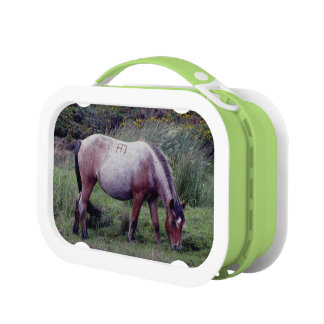 Dartmoor Pony Grazing Early Autumn Lunch Boxes