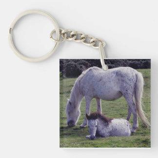 Dartmoor Pony Grey Mare Grazeing Foal Resting Keychain