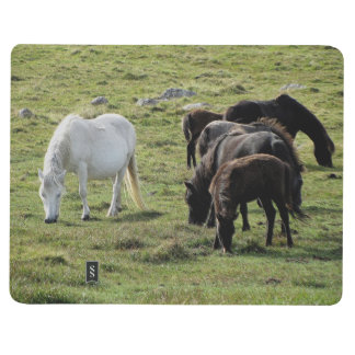 Dartmoor Pony Herd Grazing Summer Journal