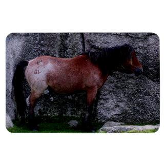 Dartmoor Pony Sheltering Bone Hill Rocks .2. Rectangle Magnet