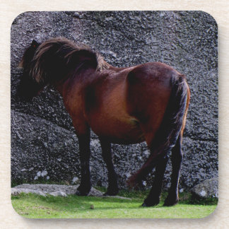 Dartmoor Pony Sheltreing  Bone Hill Rocks Coaster
