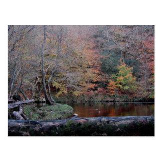 Dartmoor River Dart Holne Chase In  Autunm ( 2 ) Postcard