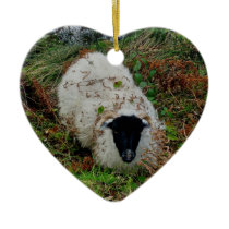 Dartmoor Sheep In Hideing Ceramic Ornament