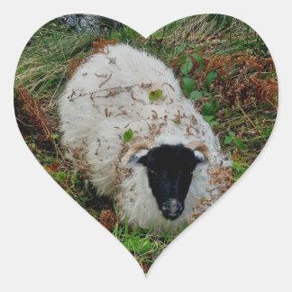 Dartmoor Sheep In Hideing Heart Sticker