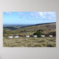 Dartmoor Sheep Poster