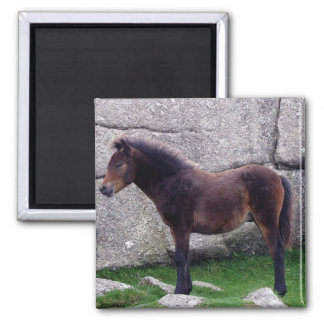 Dartmor Pony Foal Sheltering Bone Hill Rocks Magnet