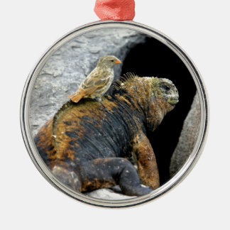 Darwin finch hitchhiking on marine iguana metal ornament