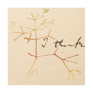 Darwin, I think tree of life Wood Canvases