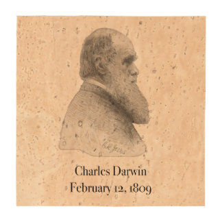 Darwin Drink Coasters