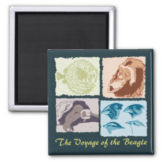 Darwin, The Voyage of the Beagle 2 Inch Square Magnet