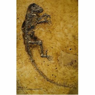 Darwinius masillae cutout