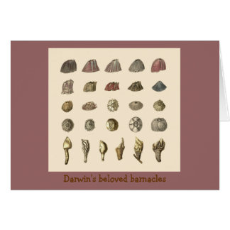 Darwin's beloved barnacles stationery note card