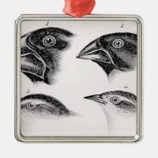 Darwin's bird observations metal ornament