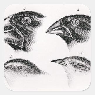 Darwin's bird observations square sticker