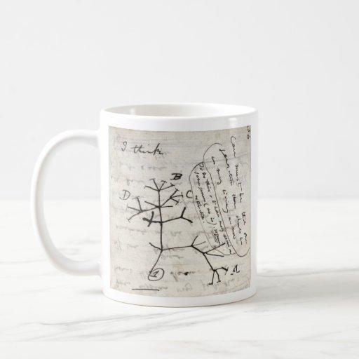 darwin's notebook mugs