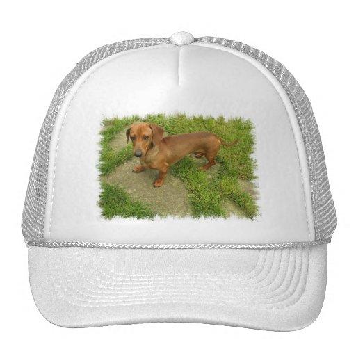 Daschund  Cap Trucker Hat