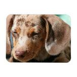 Daschund Dog Premium Magnet Vinyl Magnets