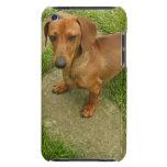 Daschund  iTouch Case iPod Touch Case